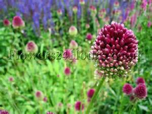 garden flowers and plants spring flowers uk garden flowers delivery london spring bulbs
