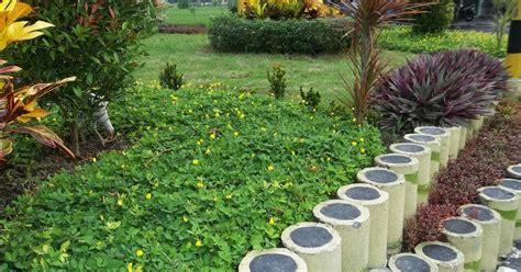 Jual Bibit Oleander jual pohon kacang kacangan harga landep tanaman hias