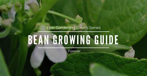 epic gardening basics   grow beans