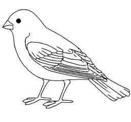 bird pictures to color sparrow colouring pages for