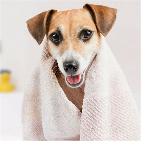 grooming guide 5 perfectly groomed celebrities accredited animal care courses holly and hugo
