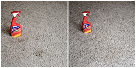 Rug Doctor Before And After by How Do Carpets Take To After Cleaning With Rug