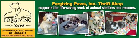 tiny paws pug rescue resources forgiving paws