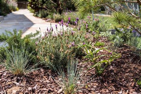 Garten Und Pflanzen by Hortensien Im Garten Pflanzen Innenr 228 Ume Und M 246 Bel Ideen