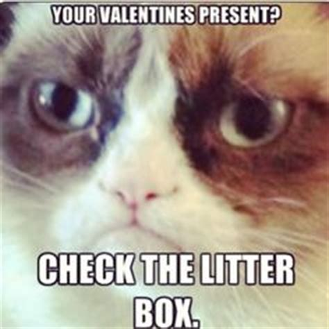 angry valentines day quotes angry cat quotes quotesgram