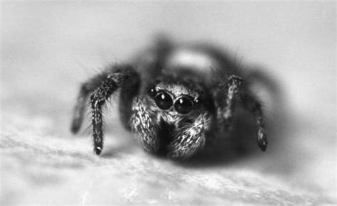 Cute Spiders Phil Ebersole S - who knew cute spiders exist