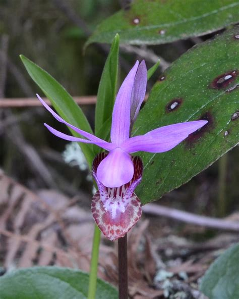 Len Otto by 2014 Photo Contest Submissions Oregon Orchid Society