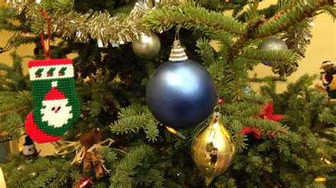 live christmas trees in the lower mainland buyers guide