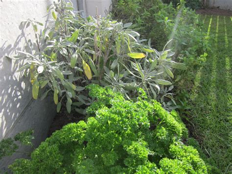 home herb garden home herb gardens all about herbs and herb gardens