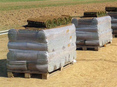 tappeti erbosi prezzi tappeti erbosi in rotoli vendita a bergamo prato pronto