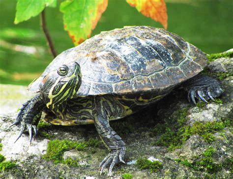 estanques para tortugas de agua