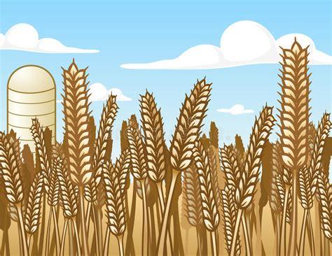 wheat field stock vector illustration  illustration
