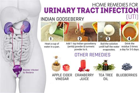 how to treat a urinary tract infection with apple cider