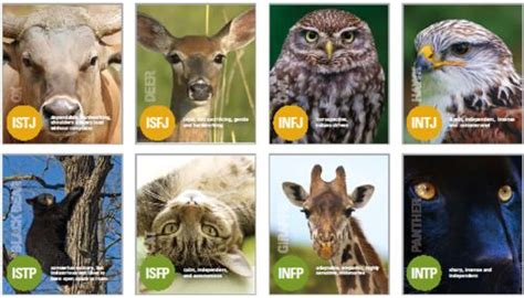myers briggs animals introverts i ve got