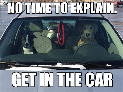 Driving Meme - driving dogs no time to explain get in the car