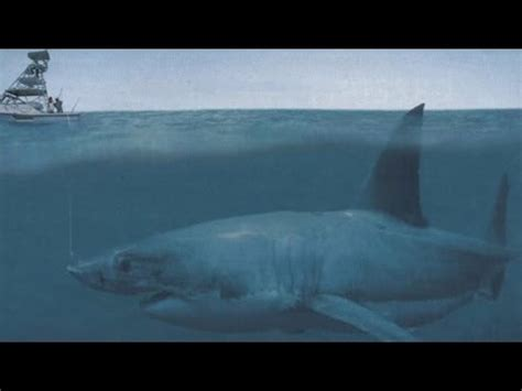 evidence of a 50 ton megalodon shark week discovery image gallery megalodon evidence
