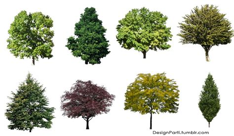 pattern photoshop trees cut out trees for photoshop download representation