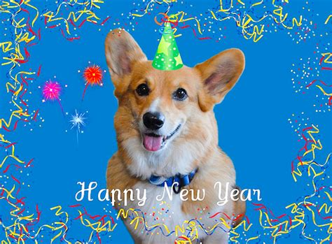 happy new year puppy great 2012 pet related resolutions taildom