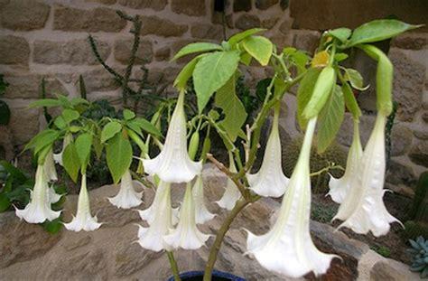 piante da giardino con fiori profumati piante profumate giardinaggio piante e fiori