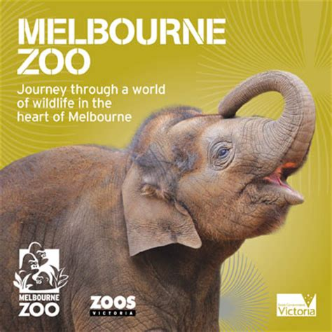 what to see in melbourne top 10 attractions activities