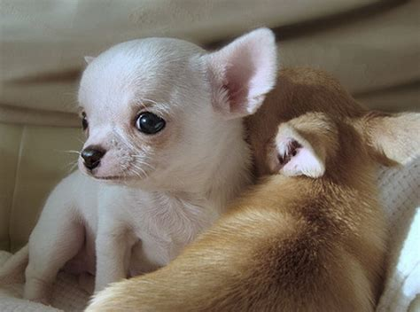 baby and puppy pictures animals talkin with pics publish with glogster