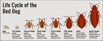 what can i buy to kill bed bugs what are bed bugs how to kill bed bugs my pakistan