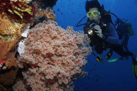 dive di erhaltung und konservierung der bunaken national marine
