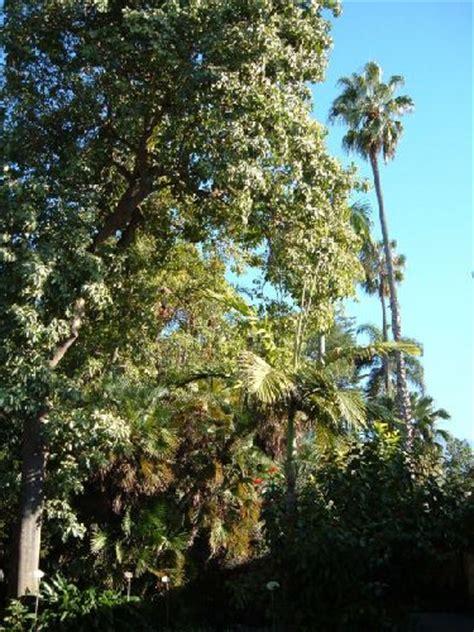 botanischer garten teneriffa parks und shows informationen 252 ber teneriffa eine der 7