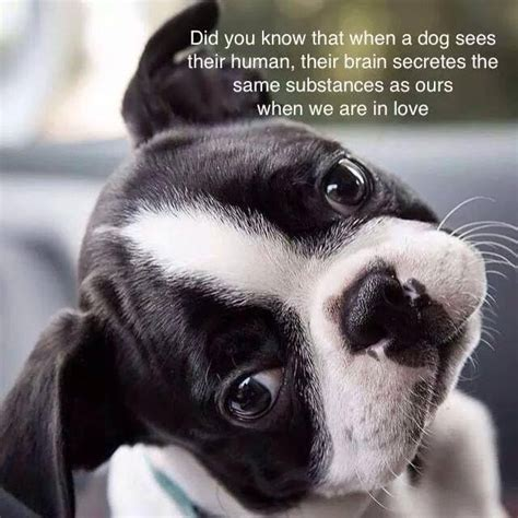 we are in love dogs love their owners and their brain secretes the same