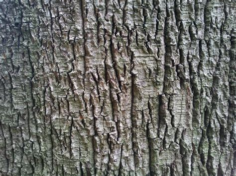 tree bark wallpaper tropical  stock photo public domain pictures