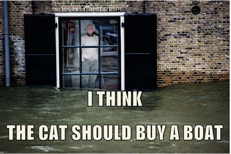 I Should Buy A Boat Cat Meme - that cat should buy a boat i should buy a boat cat