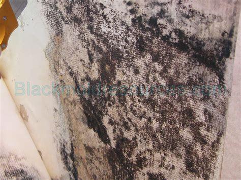wallpaper black mould is mold behind wallpaper dangerous wallpapersafari
