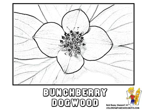 coloring page of dogwood flowers free dogwood tree coloring pages