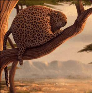 imagenes gif jaguar gifs animados de leopardos gifmania