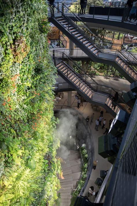 amazon creates  rainforest  office space
