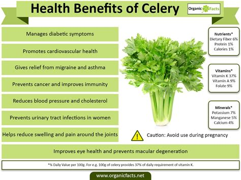 Daun Kari By Wheat Grass Seed the meaning and symbolism of the word 171 celery 187