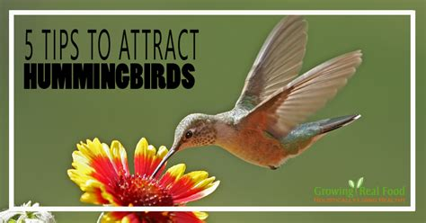 5 tips to attract hummingbirds
