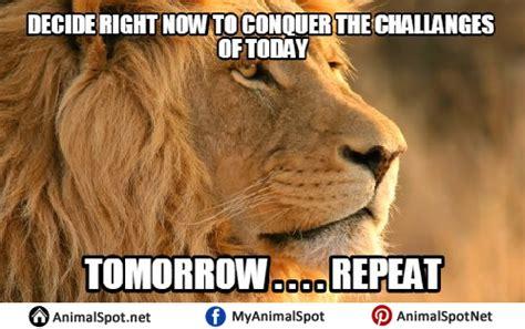 lion memes