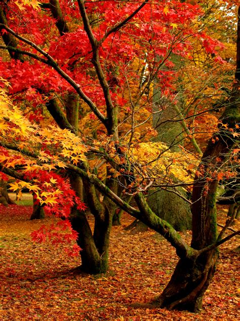 the autumn of the beauty of autumn trees 2175 nature hd desktop wallpaper