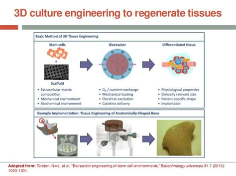 bioreactor cell culture protocol 3d cell culture engineering