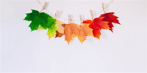 fall color schemes fall color palettes to inspire your decor proflowers blog