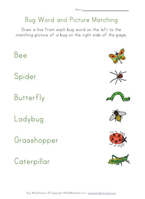 kids bug and insects worksheets bugs worksheet matching homework pinterest