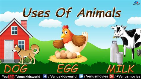 uses of uses of animals