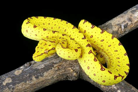 snake colors these colorful snakes are the most beautiful creatures on