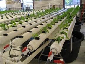 Backyard Crawfish Farming Aquaponics Rochester Ny