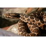 Quels Serpents Sont Dangereux En France M&233tropolitaine