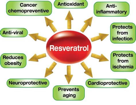 best resveratrol supplements where to buy excellent quality resveratrol supplement at a