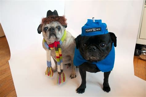 dr who pug tissuepapers