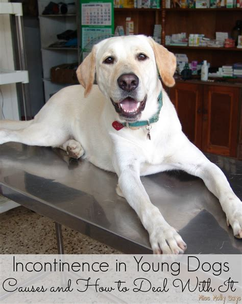 incontinence in dogs incontinence in dogs causes and how to deal with it miss molly says
