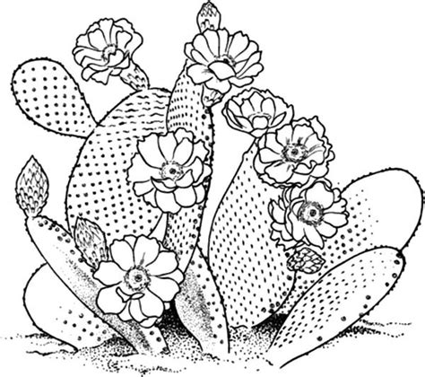 Coloring Page Cactus by Saguaro Coloring Pages